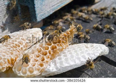 A close up of the bees on honeycomb on hive at hole. - stock photo