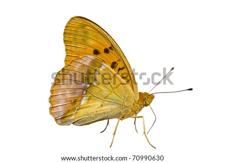 A close up of the butterfly (Brentis). Isolated on white. - stock photo