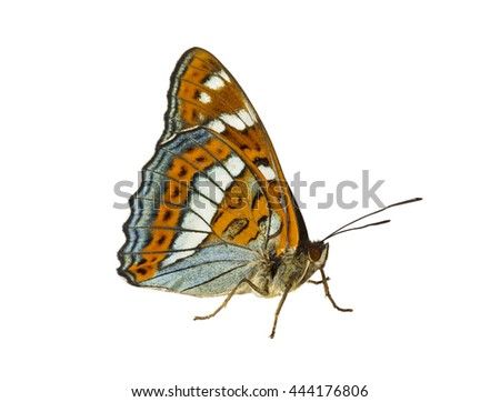 A close up of the butterfly (Limenitis populi ussuriensis), profile. Isolated on white background. - stock photo