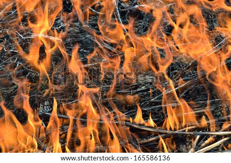 A close up of the flame and ash of brushfire. - stock photo