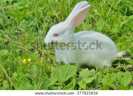 A close up of the young rabbit on grass.