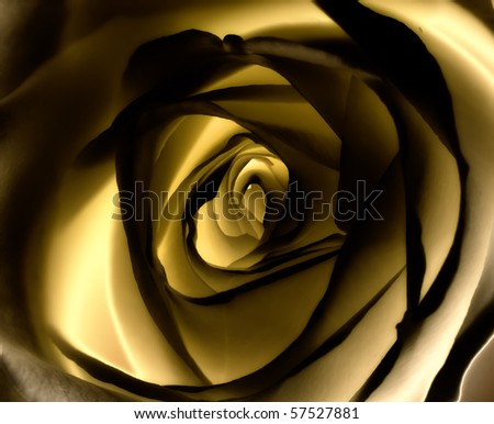A close-up photo of a yellow rose - stock photo