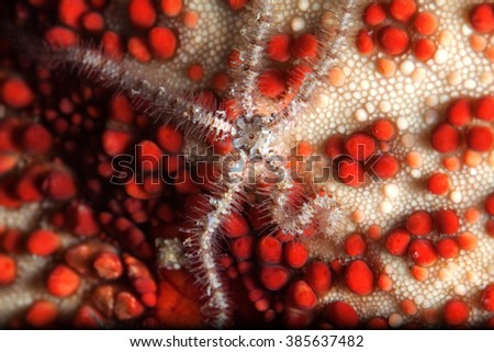 A close up portrait of a allard clown fish in Mozambique  - stock photo