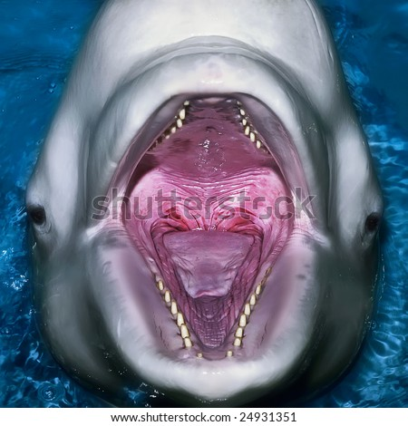 A close up portrait of dolphin with an open mouth - stock photo