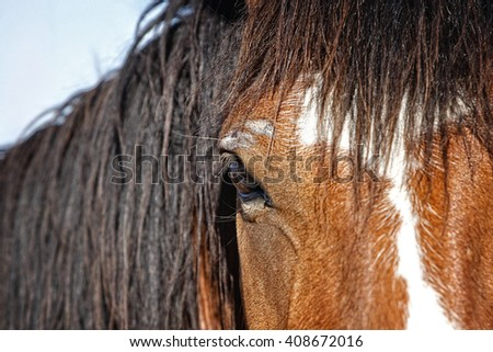 A close up the head, mane, face, and eye of an untamed horse at a western ranching event in the American West.  Shallow depth of field with focus point on the eye. - stock photo