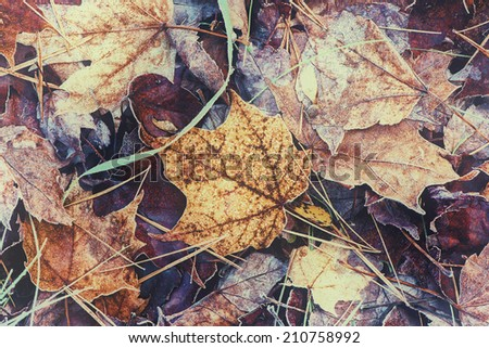 A close up view of frosted fall leaves on the ground.  Filtered for vintage retro look.