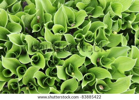 A close up view of green decorative plant leaves. Suitable for abstract background.