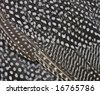 A close view of spotted feathers - stock photo