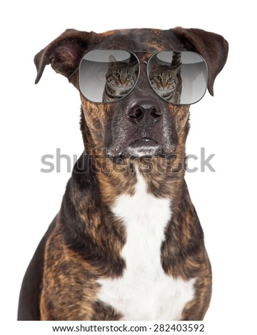 A closeup funny photo of a large breed dog wearing sunglasses with a reflection of a cat in them