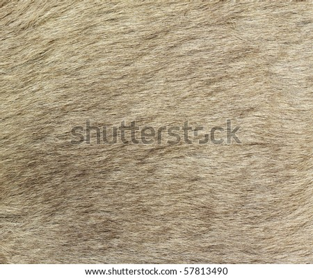 A closeup image of kangaroo fur. Great for texture, background or wallpaper. - stock photo
