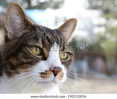 a closeup of a head of a cat