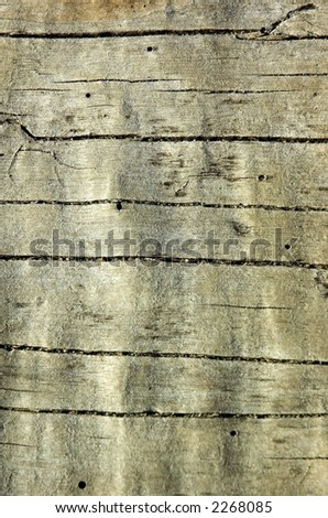 A closeup of a weathered log on the beach - stock photo