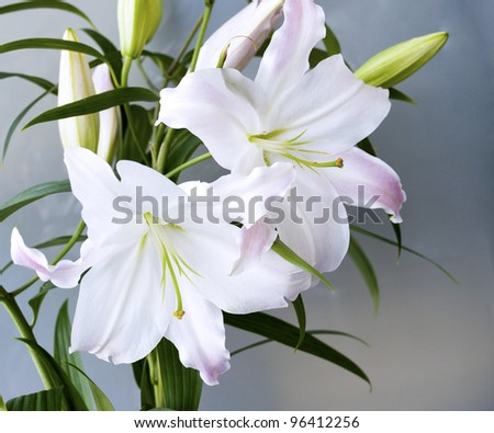 A closeup of blooming lilies - stock photo