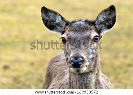 A closeup of the head of a deer