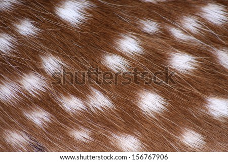 A closeup photo of some deer fur with white spots - stock photo