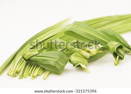 A closeup view focusing on the tied up in knot pandan leaves leaving the long leaves blur as background on white. The leaves have strong sweet fragrance and are often used to scent and flavor food.  - stock photo
