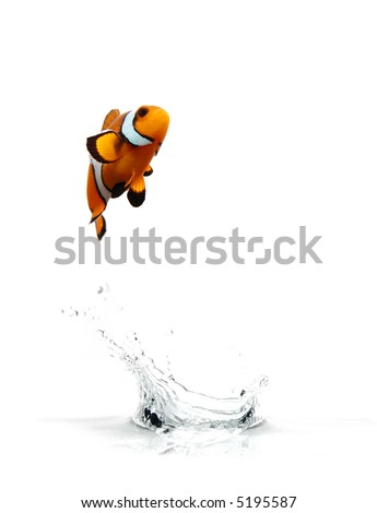 A clownfish jumping out of the water.