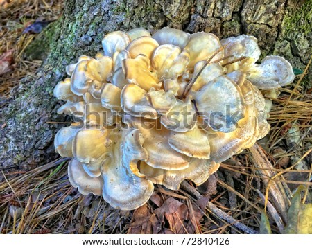 A Cluster of Mushrooms at the Base of a Tree