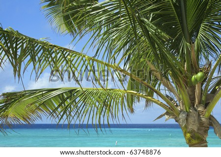 A coconut palm blows gently in the breeze overlooking the Caribbean Sea on Grand Turk Island. Horizontal shot.