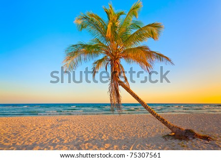 A coconut tree on a deserted tropical beach at sunset - stock photo