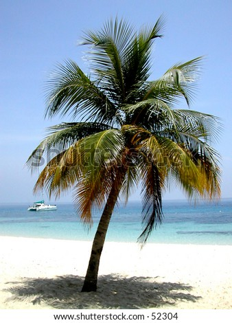 a coconut tree with a boat in the background - stock photo