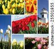A collage of beautiful colorful tulips - stock photo