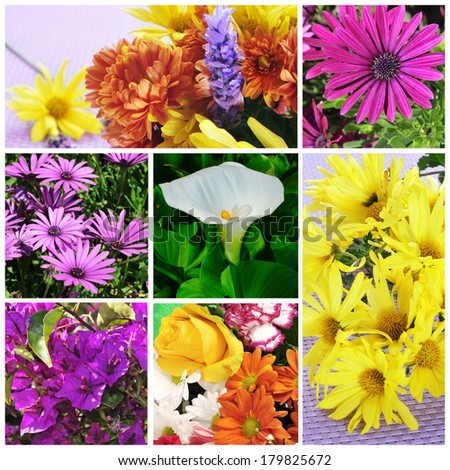 a collage of pictures of different flowers