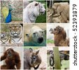 a collage photo of some wild animals - stock photo