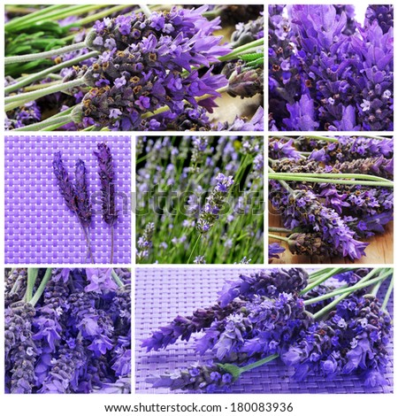 a collage with different picture of lavender flowers - stock photo