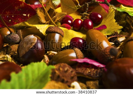 A collection of chestnuts,acorns and autumn leaves - stock photo