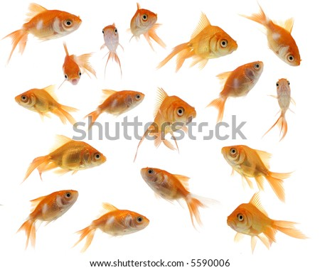 A collection of cute and whimsical goldfish against a white background. - stock photo