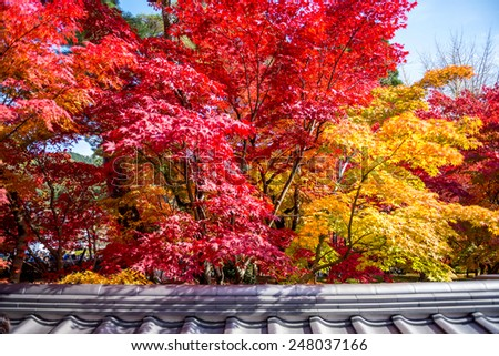 A color change of leaf over a roof  in Eikando temple