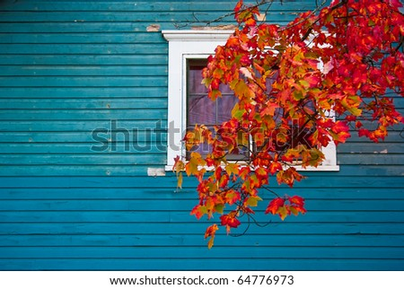 a color image of a house with blue siding with a window and a tree branch coming down across window. Leaves on branch are full of autumn leaves - stock photo