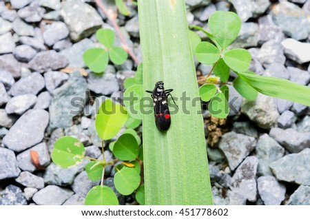 A colorful bug from top view - stock photo