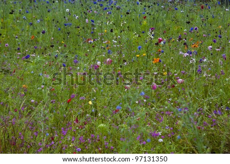 A colorful field of plants and grasses. - stock photo