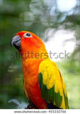 A colorful small-sized parrot