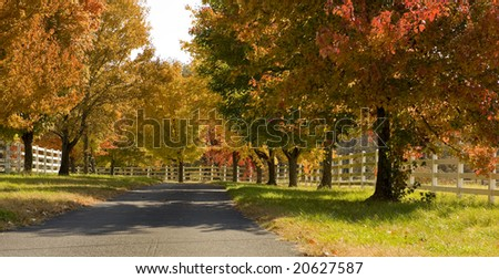 A colorful tree lined road in the fall with autumn foliage etc,