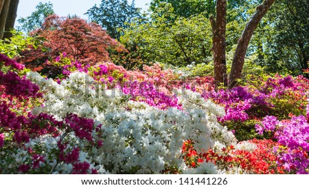 A colourful border display with azaleas, rhododendrons, acers and other shrubs. - stock photo
