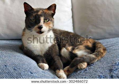 A comfortable house cat relaxes on a couch. Shallow depth of field is focused on the eyes.
