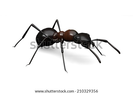 A common black ant 3D rendered on a white background.
