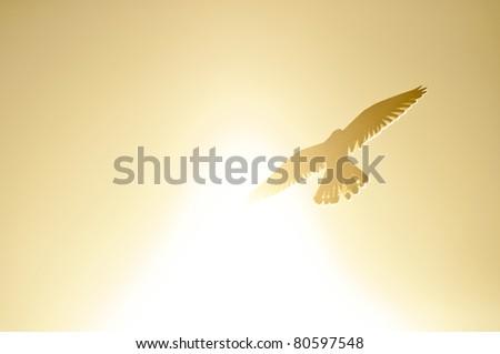 A common kestrel flying through the sunlight - stock photo