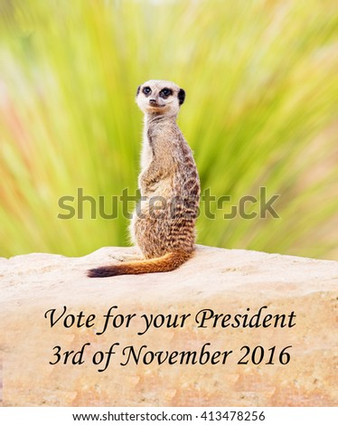 A concept photograph of a meerkat concerning the forthcoming Presidential elections. - stock photo