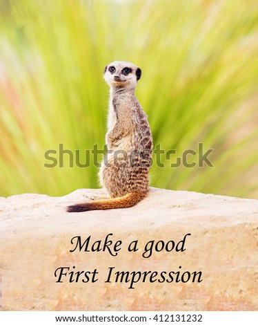 A concept picture of a meerkat warning of the importance of making a good first impression - stock photo