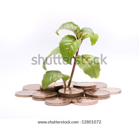 A conceptual image with a plant and coins isolated on a white background. - stock photo