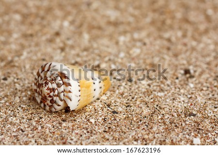 a cone shell on a sandy beach great generic background for tropical travel