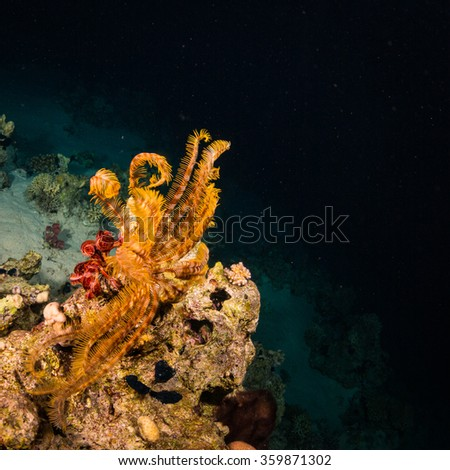 A coral reef at night - stock photo