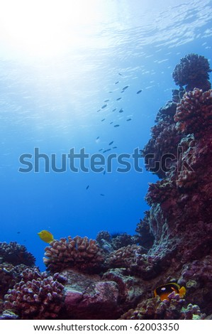 A coral reef formation at Pinnicale Point, Hawaii. - stock photo
