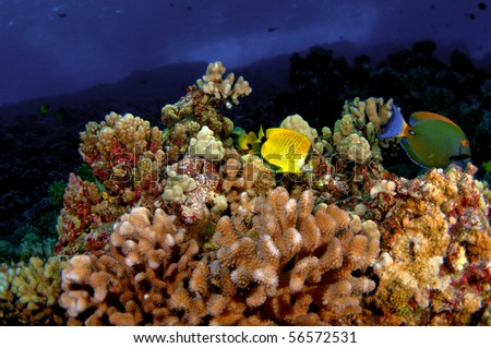 A coral reef formation in Molokini Crater, Hawaii - stock photo