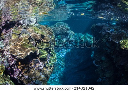 A coral reef, made up primarily of encrusting and reef-building corals, thrives near a remote island in the Solomon Islands. This part of Melanesia is known for its high marine biological diversity. - stock photo