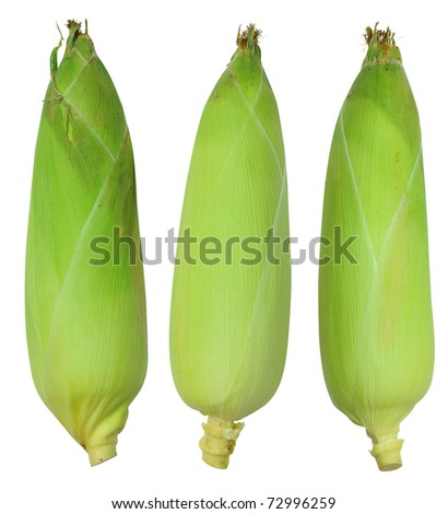 A corn leaves that are not sheep - stock photo